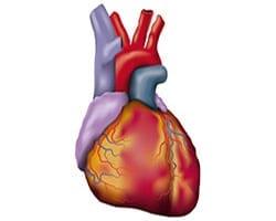 Herz Themenseite